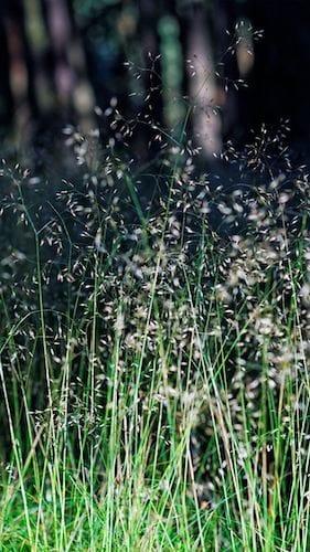 خلفيات الايفون تظهر جمال الطبيعة الخضراء