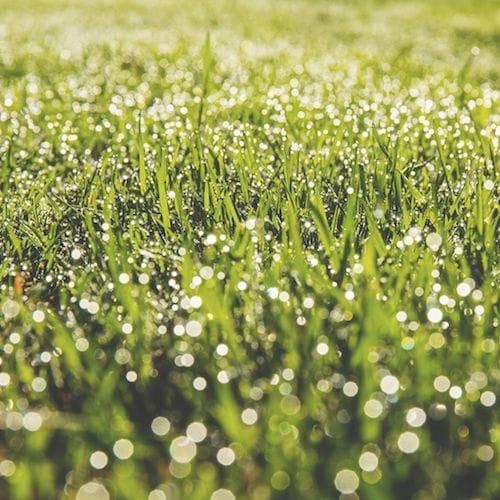 خلفيات الايباد تظهر جمال الطبيعة الخضراء